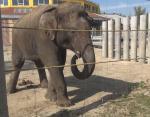 Желание свободы: самые известные случаи побегов животных из зоопарков