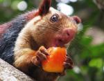 Фото удивительных животных: интересные факты о белках с радужным окрасом шерсти