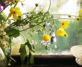 Гисметео Украина: погода на 14 июня – практически на всей территории Украины дожди