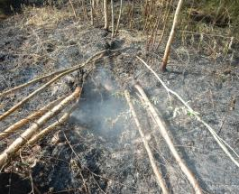 ЧМ по футболу – 2018 под угрозой: в 25 км от Петербурга горит торяфяник с боеприпасами
