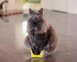 Смешные фото котов: как выглядели бы животные если бы их приносила служба доставки