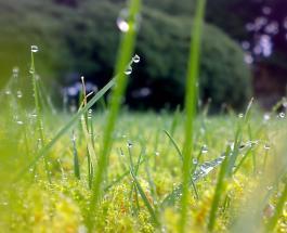Гисметео Украина: погода на 28 июня – почти на всей территории страны ожидаются дожди