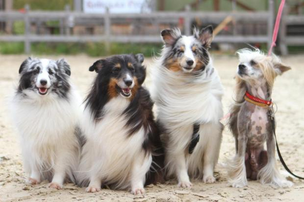 Четыре собаки