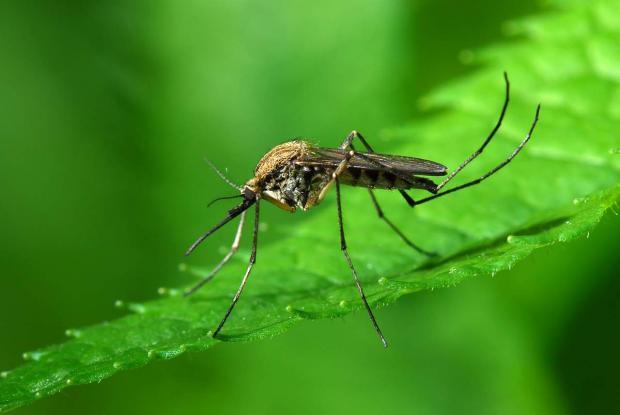 Как летом обезопасить себя от укусов комаров