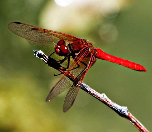 Знания которые могут спасти жизнь: как выглядят укусы разных насекомых