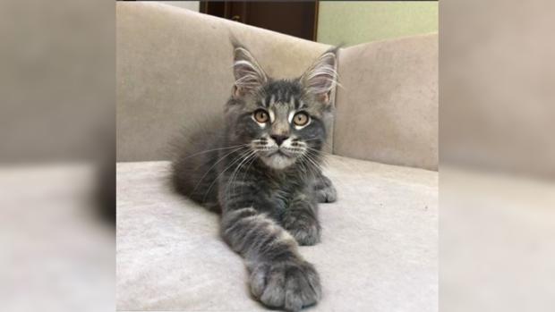 Коты которые уверены что люди живут у них а не наоборот