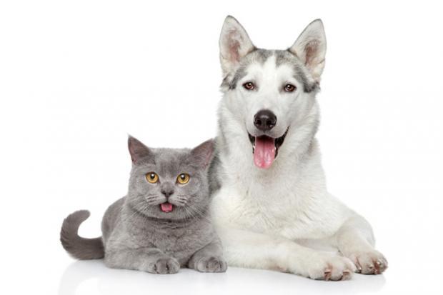 кошка собака