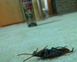 Как избавиться от насекомых: народные средства против домашних вредителей