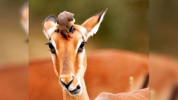 Животные тоже умеют дружить: топ-15 трогательных фото братьев наших меньших и их товарищей