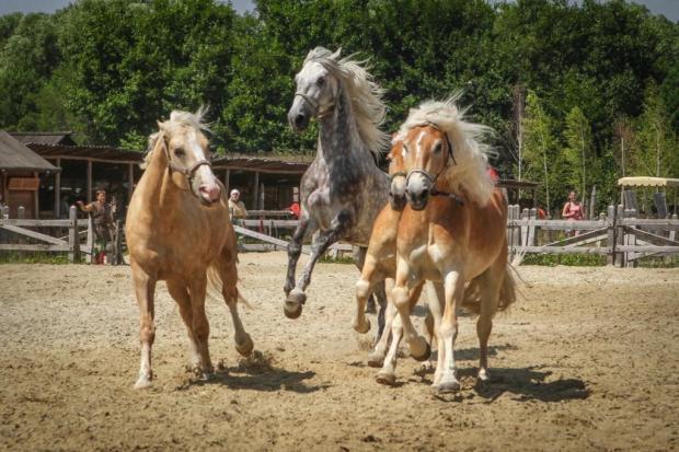 Под Киевом представят уникальную коллекцию лошадей