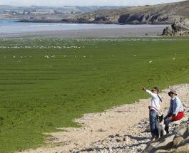 Пляжи Европы массово закрываются из-за опасных медуз и токсичных водорослей