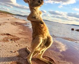 Животные спасаются от жары: топ-15 охлаждающих фото