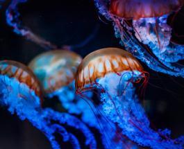 Первая помощь при укусе медузы: главный принцип обработки пострадавшего участка тела