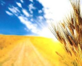 День Независимости Украины: открытки и короткие поздравления с государственным праздником