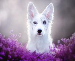 Человек и собака: ученые доказали сильную эмоциональную связь между людьми и их питомцами