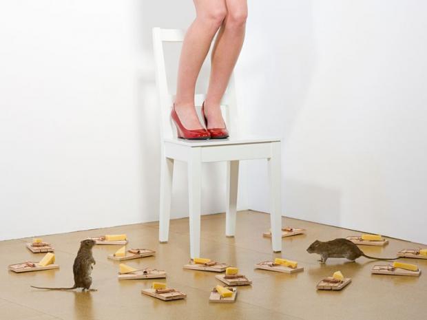 боязнь мышей