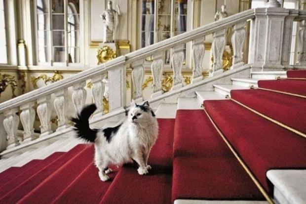 эрмитажный кот