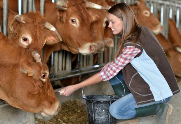 уход за коровами