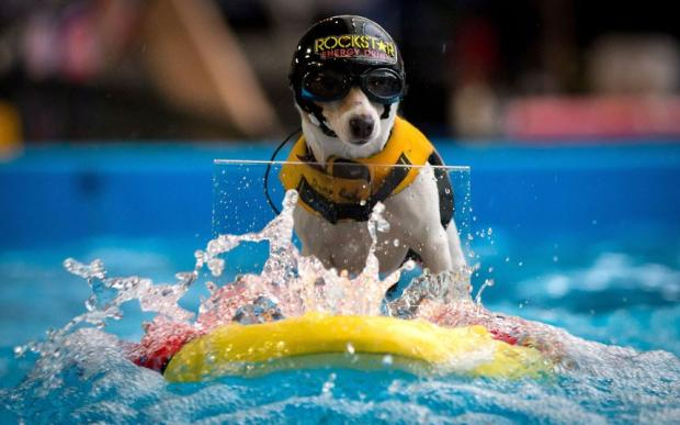 Su'ruff Camp - серфинг для собак