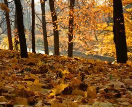 Красивые места Украины: 7 невероятно живописных парков которые стоит посетить осенью