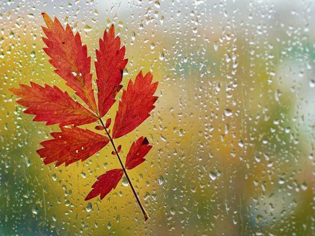 Гисметео Украина: погода на 23 сентября - на большей части территории страны будет дождливо