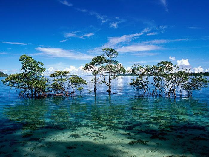 Radhanagar Beach - Остров Хавелок, Андаманские и Никобарские остров