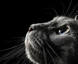 Смешные фото животных: Сеть покоряет проект немецкого фотографа