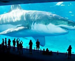 Мегалодон: ученые обнаружили в океане вид акул миллионы лет считавшийся вымершим