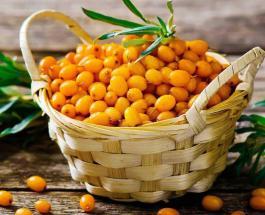 Что приготовить из облепихи: топ-5 рецептов с использованием полезной ягоды