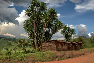 Как выглядит мать 44 детей: поразительная история жизни женщины из Уганды