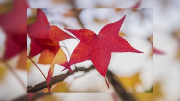 Гисметео Украина: погода на 14 октября - тепло и солнечно по всей стране