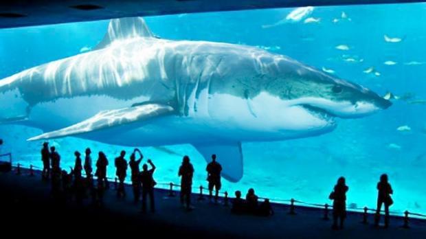 Мегалодон акула