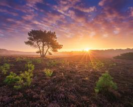 Красивые пейзажи: красочный вереск голландских полей снятый в разное время года