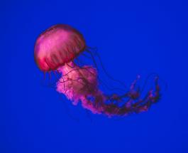 Капли для глаз и производство светящегося пива: Топ-8 сфер в которых используют медуз