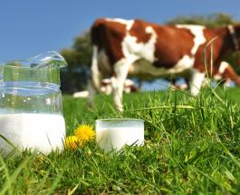 Чем можно заменить коровье молоко в случае непереносимости организмом полезного продукта