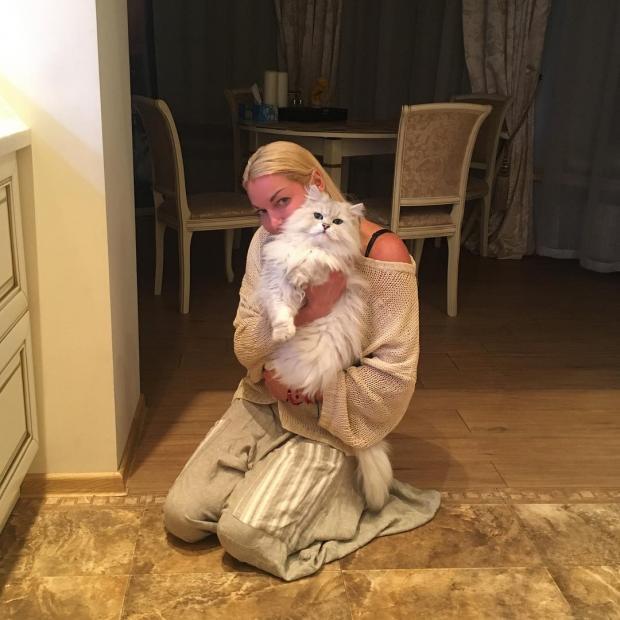 волочкова с котом