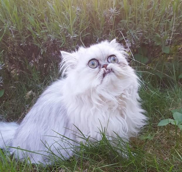 Страшная красота кота: новая звезда Инстаграм с очень особенной внешностью