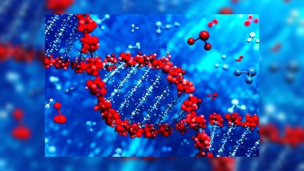гены китай