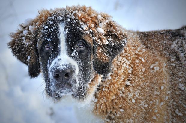 собака зима
