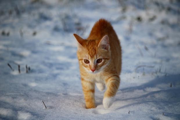 кот зима