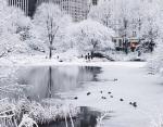 Юго-Восток США парализовали снегопады: в некоторых штатах высота покрова достигает 50 см