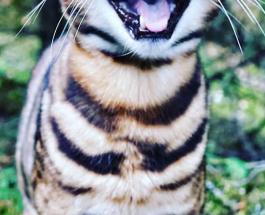 О чем думают коты?