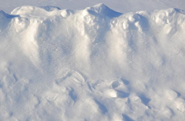 В США школьник добился отмены 100-летнего запрета на игру в снежки