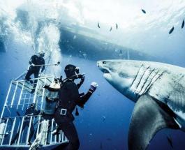 Бикини с защитой от акул: ученые работают над созданием купальника для спасения жизни