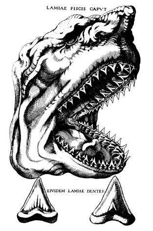 Голова Мегалодона - рисунок естестоиспытателя Нильса Стенсена
