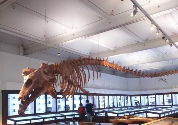 базилозавр