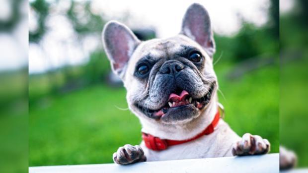 История спасения брошенных щенков: маленькие питбули завоевали любовь пользователей Сети