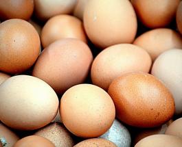 Белые или коричневые: существует ли разница пользы куриных яиц
