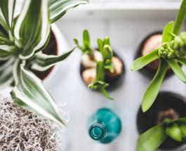 10 растений которые можно выращивать дома круглый год в воде