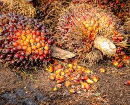 Пальмовое масло: в чем содержится продукт заслуживший скверную репутацию